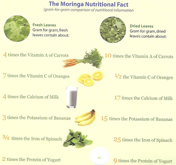 Product Details | Moringa Bio Source